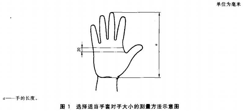 图1 选择适当手套对手大小的测量方法示意图